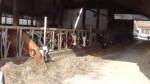 Besuch im Schweine- und Kuhstall