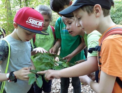 Die Faszination Wald live erleben – Treis-Karden räumte mit drei 1. Plätzen ab