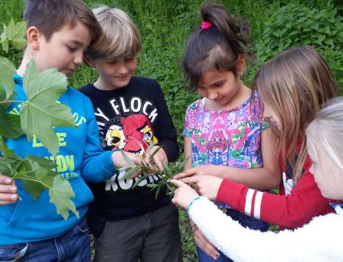 32. Waldjugendspiele lockten Schüler in den Binninger Wald – Preise und Urkunden