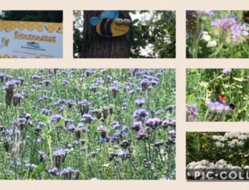 Unser Bienen- und Hummelmagnet wächst und gedeiht